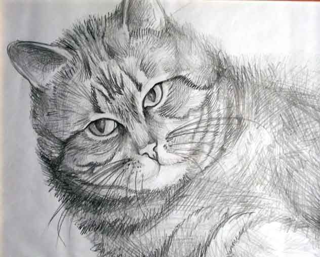 Drawing in pencil (A Cat)