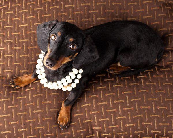 Teresa Berg's Five Tips For Better Dog Photography | Dogster