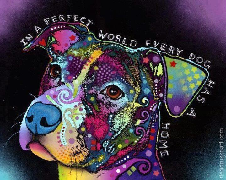 Mooie kleurige hond