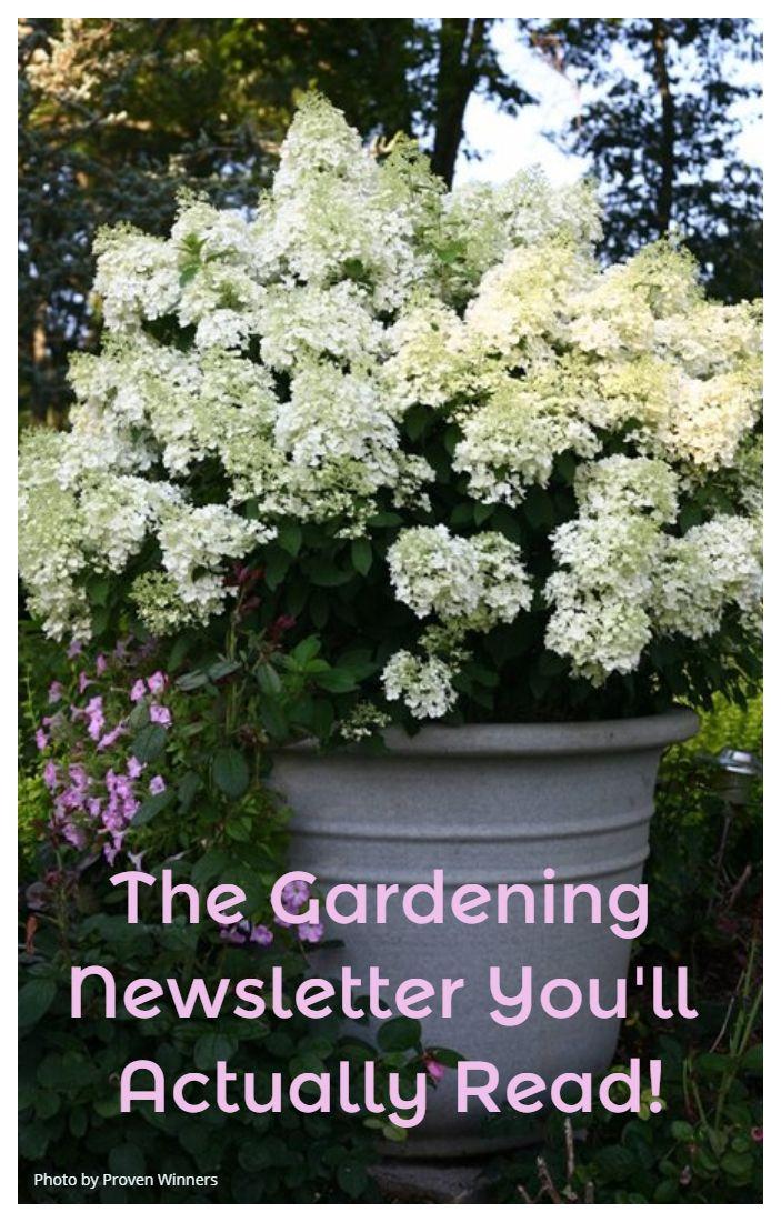 The Gardening Newsletter You Ll Actually Read Garden Design Garden Design Magazine Plants