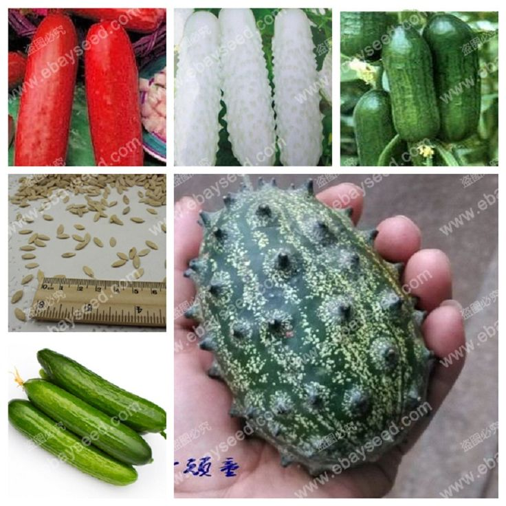 Balcony cucumber seeds 100%true cucumber seeds varieties complete green fruits and vegetables - 30 seeds/bag