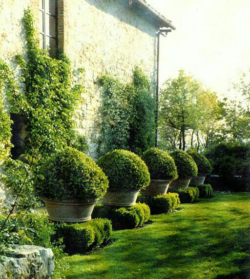 18 Best Images About Boxwoods In The Garden On Pinterest 400 x 300