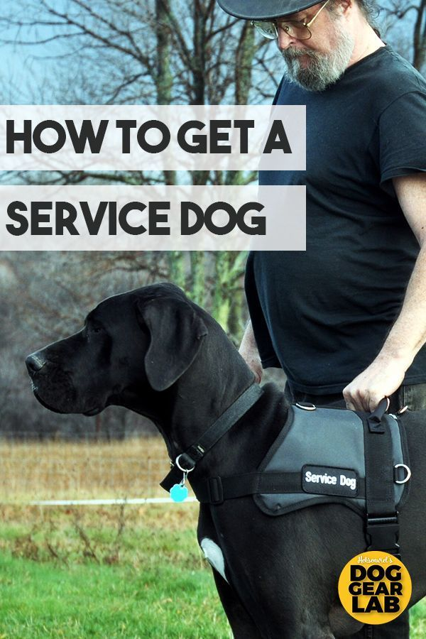 How To Get A Service Dog Service Dogs Service Dog Training Dog
