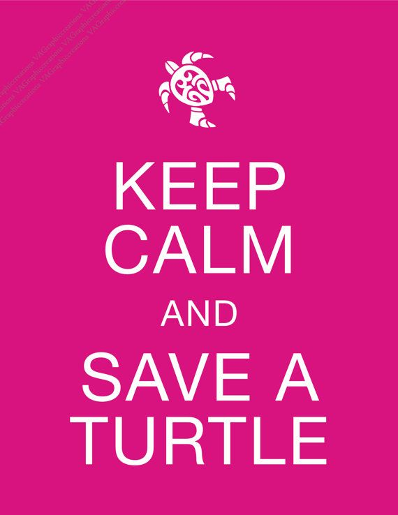 I break for turtles. Then get out on the highway and move them off the road.