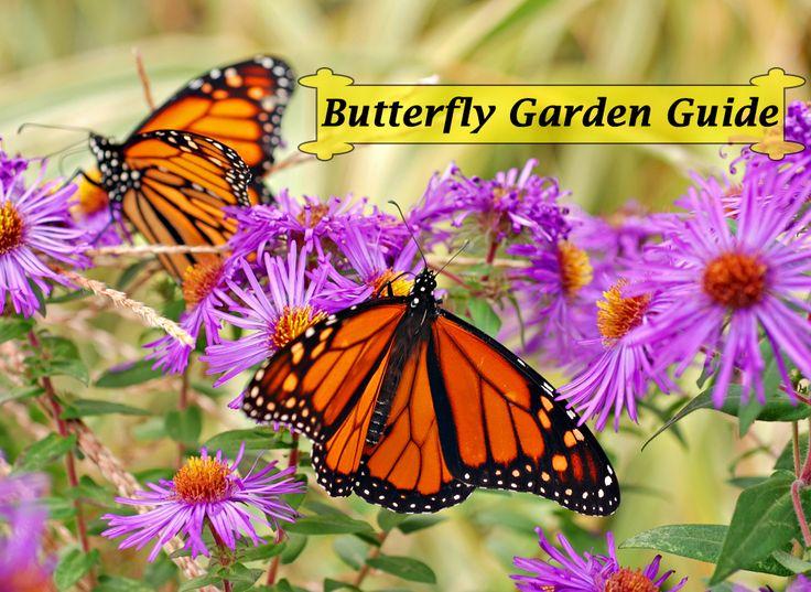 Book  Instant Download. A ButterflyButterfly Garden ...