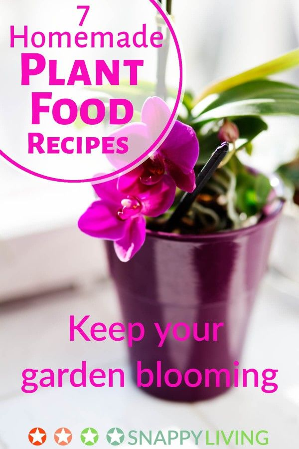 Plant food from the store isn't cheap, and it often has harsh chemicals. Check out my seven homemade plant food recipes, which are cheap and easy to make, and safe for the environment, pets and people.