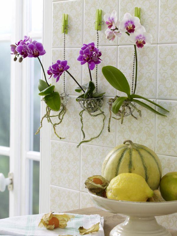 Küchendeko zum Selbermachen - 944329_orchideenInDrahtkoerbchen_600x80011 ❤ love the strainer idea! ❤