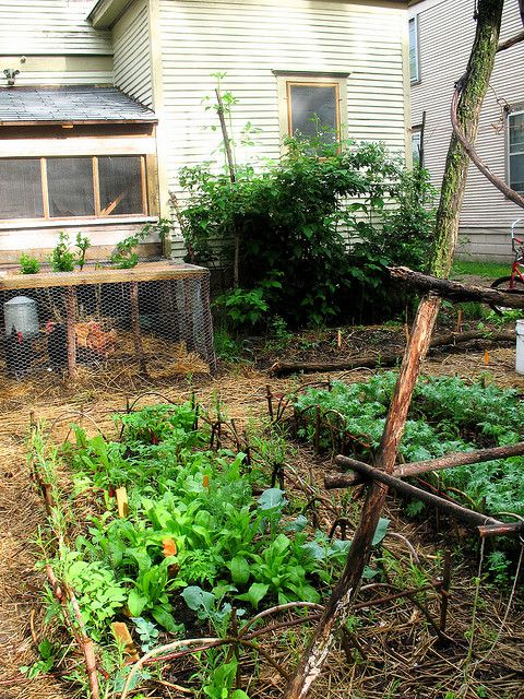 garden with chickens -so elementary! this set up so reminds me of the good old days -where everything was just so basic -you plant where there's space, so is the chicken coop with simple chicken wires....rustic...