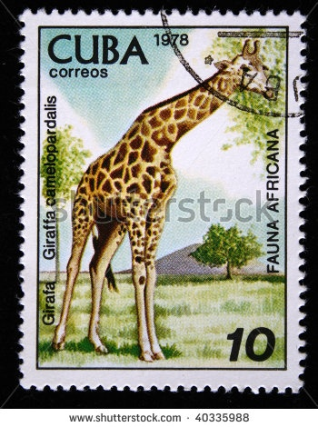 CUBA - CIRCA 1978: A stamp printed by Cuba shows the Giraffe - Giraffa camelopardalis, stamp is from the series, circa 1978 by IgorGolovniov, via ShutterStock