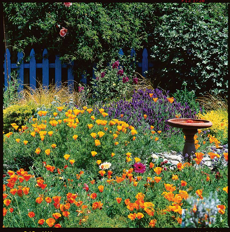 9 Cottage Style Garden Ideas: Your Guide To Growing An English Cottage Garden In The