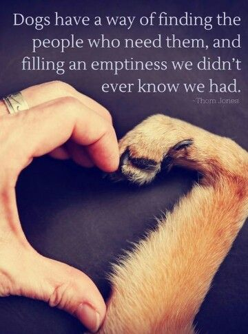 A dogs Love is Pure and Unconditional - Dogs have an incredible ability to feel what we feel, know that we need them. They are there when we are sad, happy, scared, and alone.