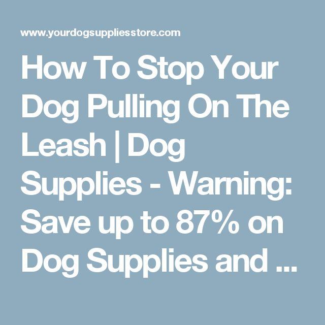 How To Stop Your Dog Pulling On The Leash | Dog Supplies - Warning: Save up to 87% on Dog Supplies and Dog Accessories at Our Online Pet Supply Shop