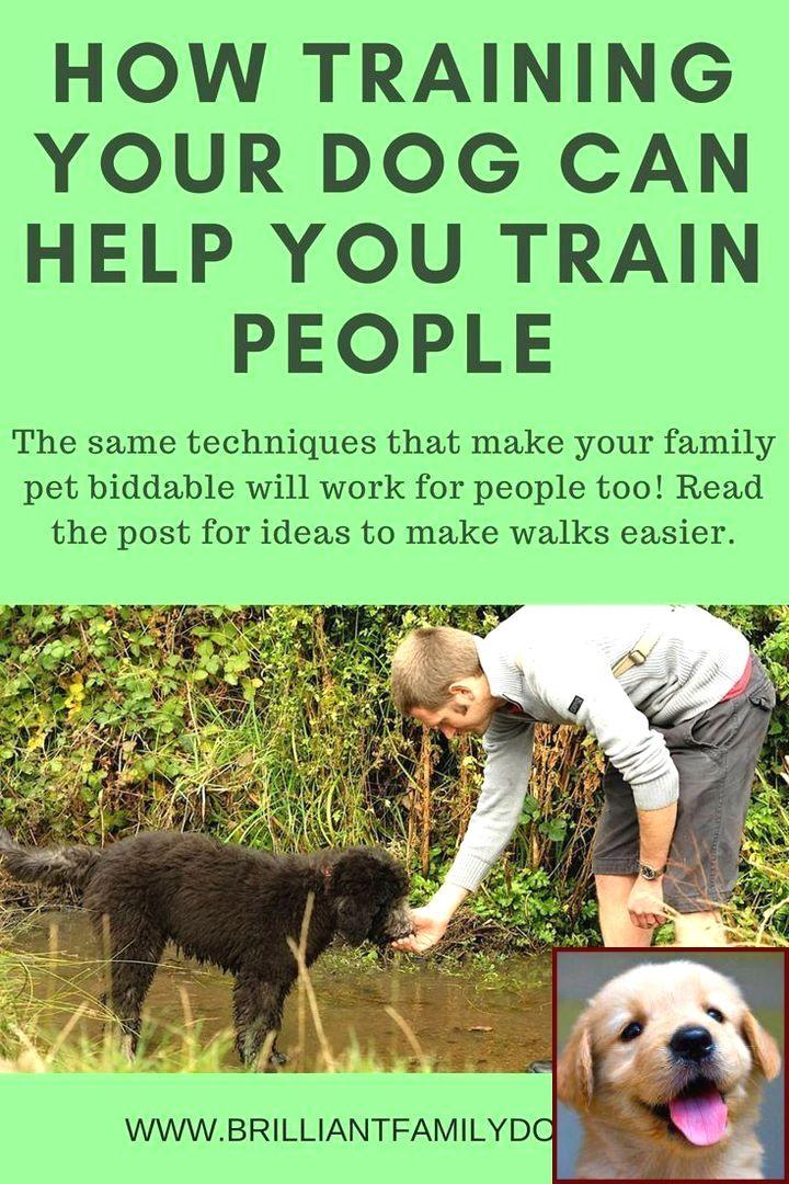 Dog Behavior Rehab Yelp And Clicker Training Dog On Leash Dog