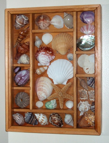 27 best seashells for display images on pinterest shells for Ideas for displaying seashells