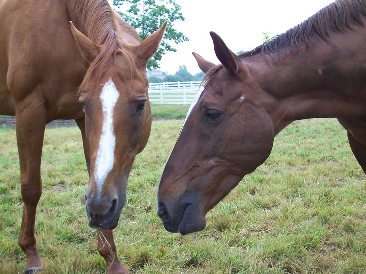 Best Friends (Cachet, Jody)