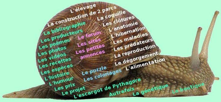 Gireaud: heliciculture (élevage des escargots)