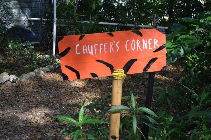 chuffer - Dade City's Wild Things