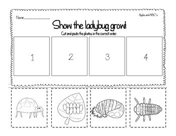 TPT freebie including mini reader and sequencing sheet, describing the life cycle of a ladybug.