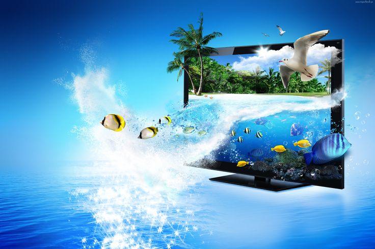 Ocean, Monitor, Mewa, Rybki, Grafika, Komputerowa