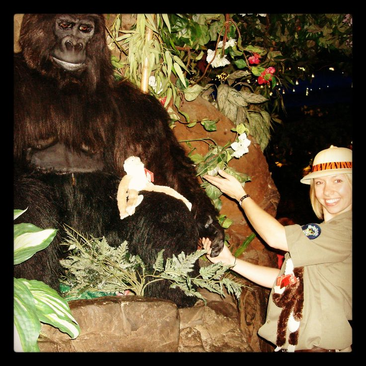 To date through Educational Tours, together with the World Land Trust,  Rainforest Cafe has helped save over 3.6 million m2 of depleted Rainforest.