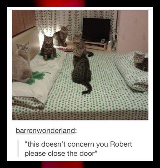 Only Cat Business - qui trouve ces citations hilarantes ?