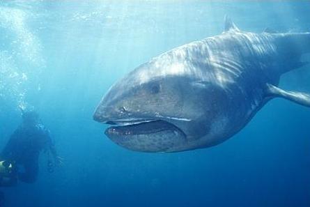 shark indenifaion   The Paranormalistics: List of Cryptids