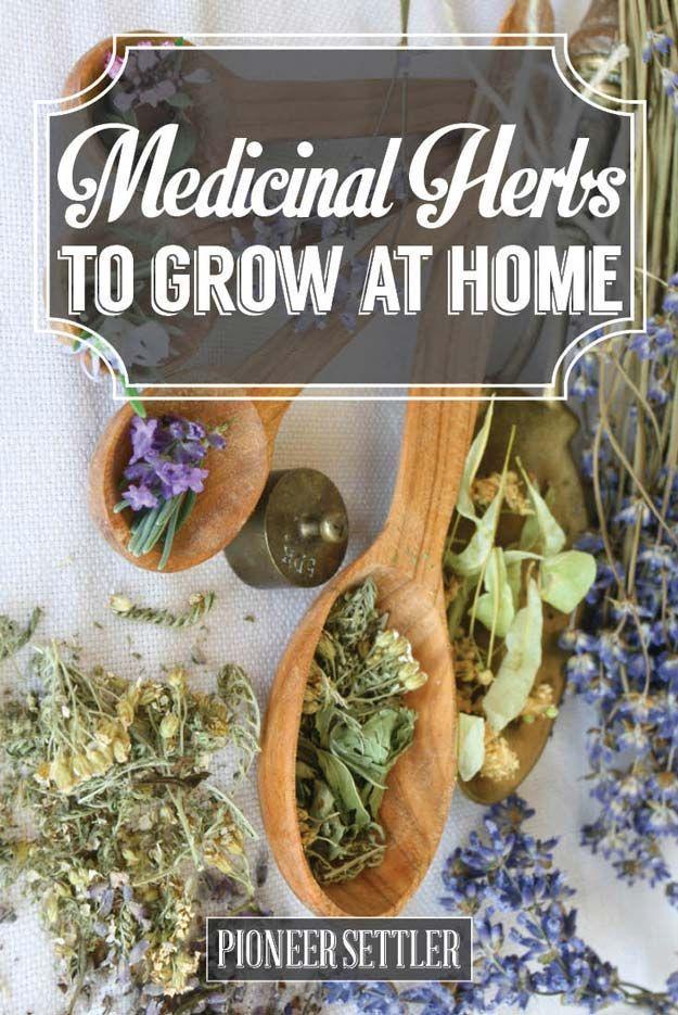 5 Medicinal Herbs to Grow at Home                                                                                                                                                                                 More