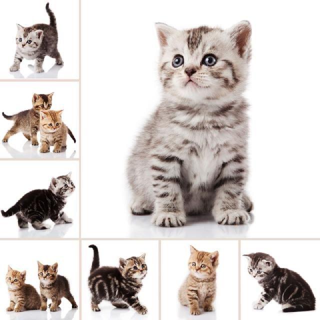 Existe uma enormidade de opções de nomes para gatos filhotes que acabaram de entrar para a família. Confira uma lista dos 200 melhores nomes para gatos e batize o seu pequeno bichano!