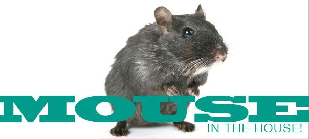 How To Keep Mice Out Of Your Home And Garage Preparedness Pinterest Gardens Common Sense