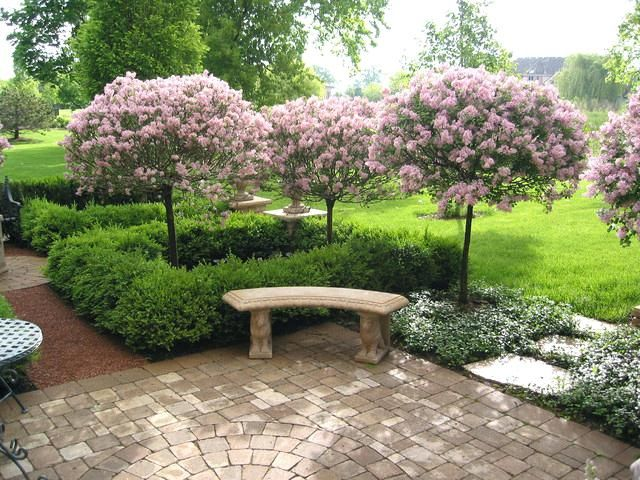 Foliage Border Plants For Landscaping In India Garden Designs