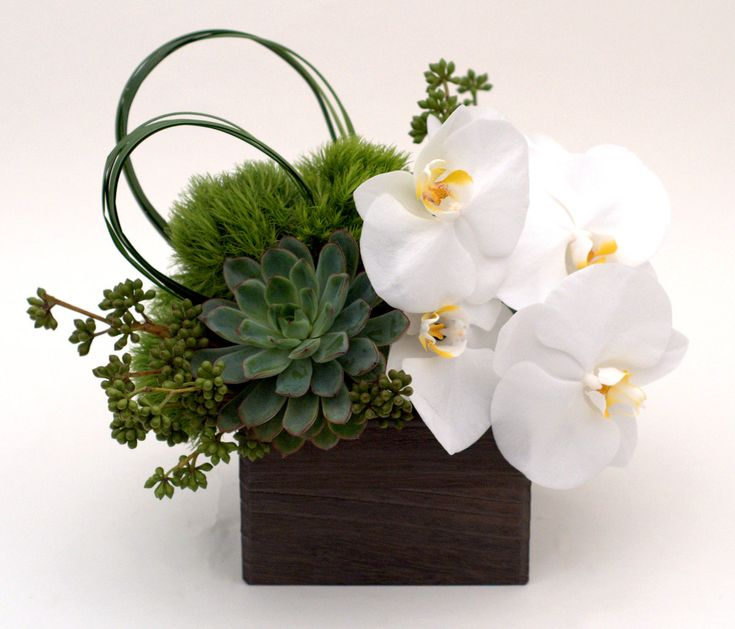 White phalenopsis orchid and succulents in a modern wooden box