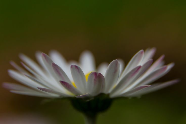 Flower Close up / Macro by Frapsoft Photography on 500px