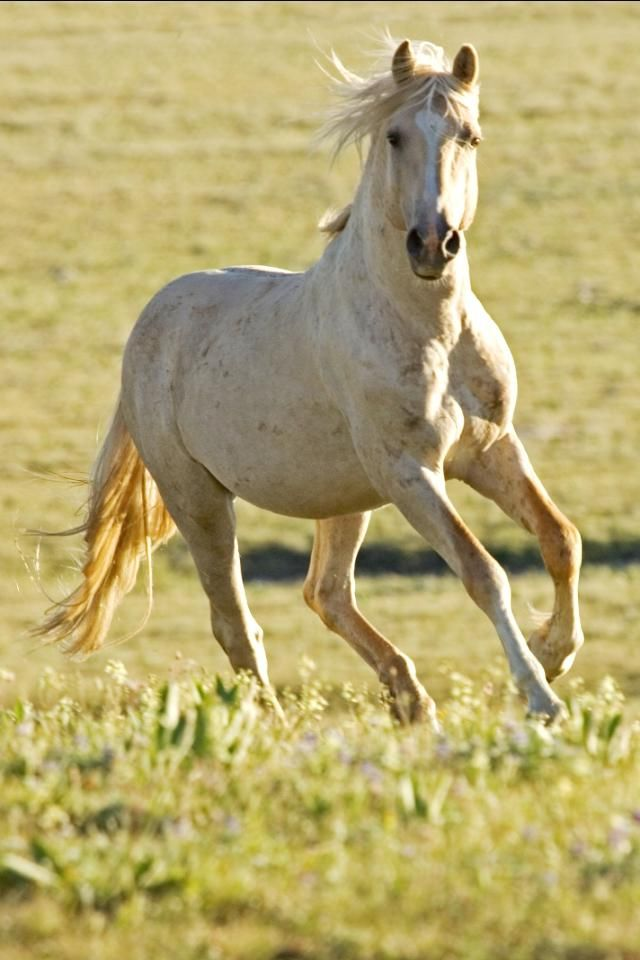 8k Animal Wallpaper Download: Horse Photos Downloadable Free