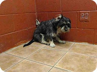 URGENT!!! Male Terrier (Unknown Type, Medium) Dog for adoption in Downey, California - NOE ID#A5040324