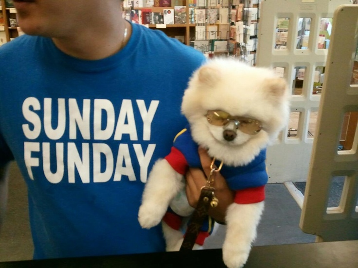 A dog with sunglasses...now I've seen everything!: Sunglasses Now I Ve, Wearing Matching, Food Drink, Dog, Favorite Recipes, Matching Shirts