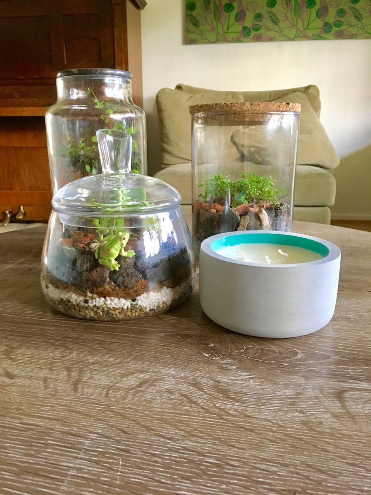 My 7 year old son put his plastic frog in this terrarium