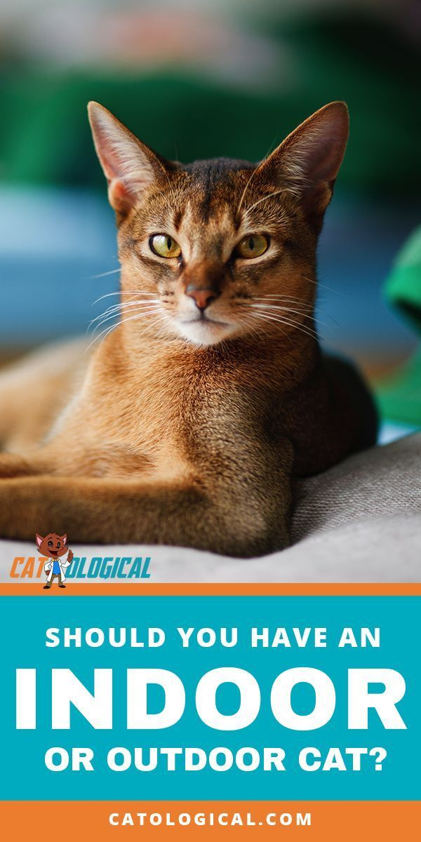 Whether You Choose To Have A Cat Stay Inside Or Go Outside You Should Keep Informed On The Differences Of Each And How The Cats Outside Cat Care Cat Parenting