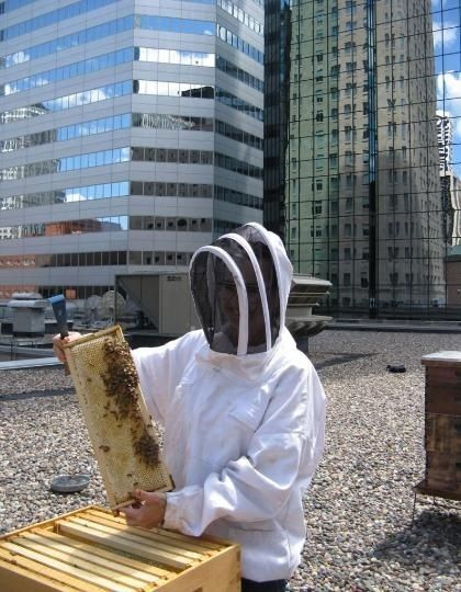 """The Minnesota Pollution Control Agency posted pictures and information on BuzzFeed Community about """"Why Urban Beekeeping is Awesome."""" The story reports that """"Minneapolis based W Hotel at the Foshay recently installed two wooden apiaries (bee hives), meaning 120,000 bees could be renting a room next door to you."""""""