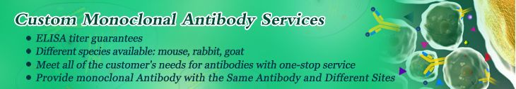 Custom Monoclonal Antibody Services. Elabscience's monoclonal antibodies are produced in hybridoma cell lines derived from the fusion of myeloma cells and antibody-producing B-lymphocytes.