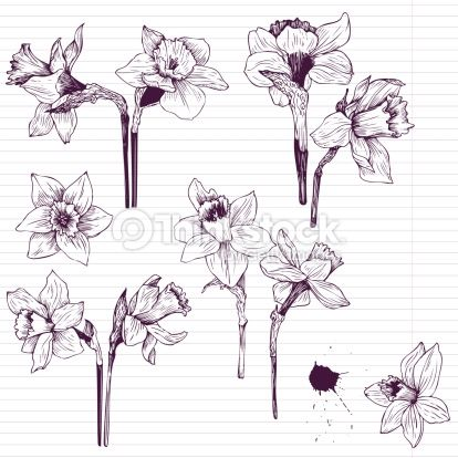 Clipart vectoriel : Set of line drawing narcissus
