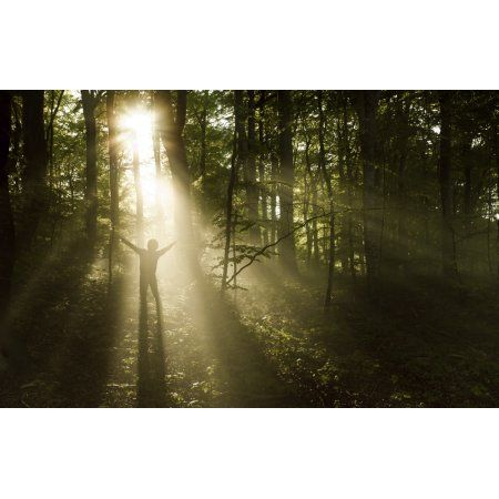 Silhouette of a man standing in the sunrays of a dark misty forest Denmark Canvas Art - Evgeny KuklevStocktrek Images (36 x 23)