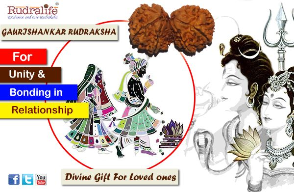 BENEFITS OF GAURISHANKAR RUDRAKSHA: The Gaurishankar is a combination of two rudrakshas joined together naturally, signifying unity and bonding. It is blessed by both - Shiva and Parvati who are See more http://www.rudralife.com/rudraksha-beads/gaurishankar-rudraksha.html