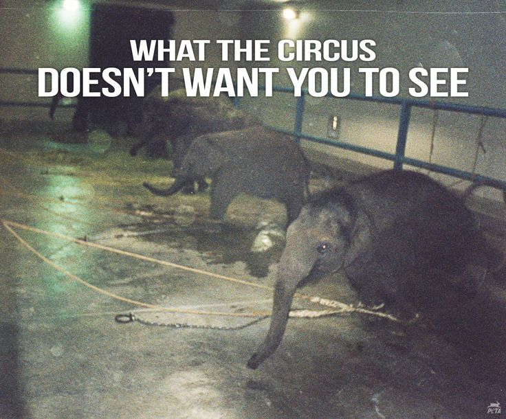 Animal abuse in circuses essay writer
