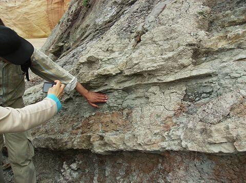"""Praia do Baleal: aspectos de erosão diferencial em níveis argilo-siltíticos da Formação """"Grés Superiores com Vegetais e Dinossáurios"""" (FRANÇA et al., 1960), do Jurássico Superior."""