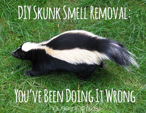 DIY Skunk smell removal: You've been doing it wrong Click To Tweet There is no amount of vinegar rinses or baths in tomato juice that is going to save your dog (or your house) from smelling like the putrid death smell of skunk. You need something stronger that packs the punch of chemical reaction potent …