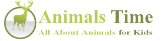 Animal info and videos