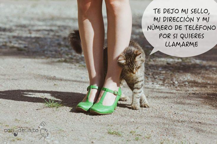 gato-frotar-piernas