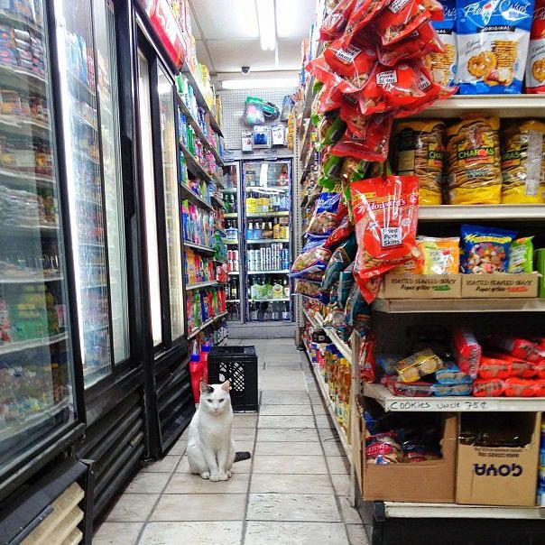 25 Places You'll Find Bodega Cats