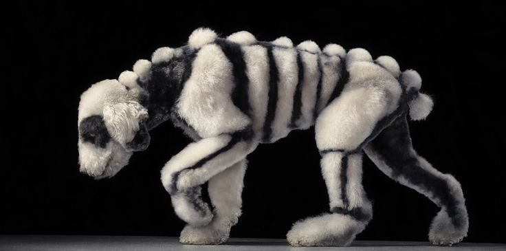 Dogs - author Lewis Blackwell Photographer - Tim Flach  fine art book: Timflach, Animal Photography, Halloween Costumes, Dogs Photography, Dogs Grooms, Skeletons Dogs, Tim Flach, Poodle Color Pink, Dogs Portraits