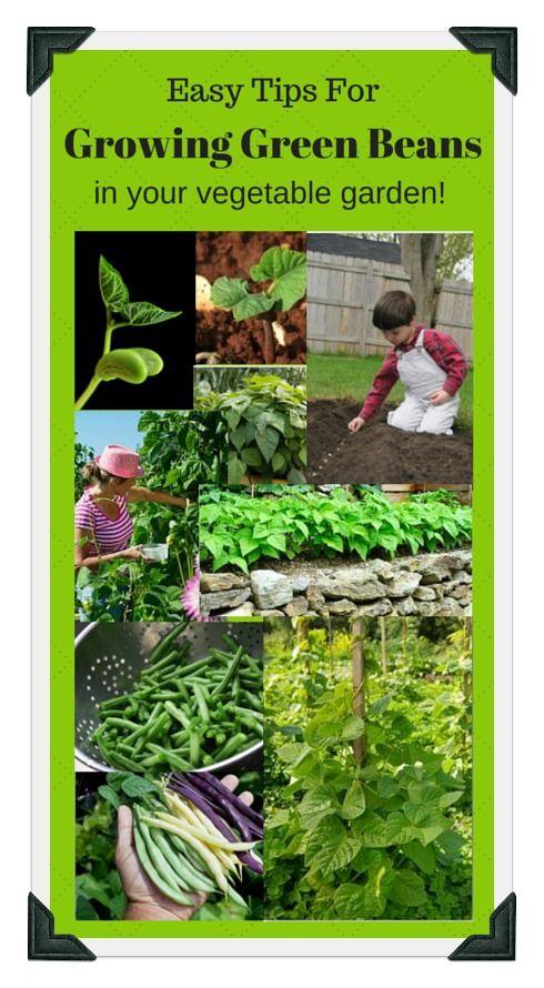 161 best images about vegetable garden beginner plans on for Vegetable bed planner